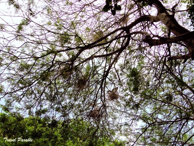 Nests on the canopy